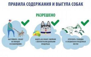 Какие правила выгула собак?