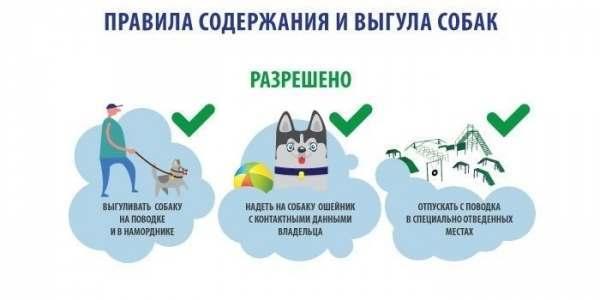 Правила выгула собак: закон в 2020 году в России, штраф, запрещенные места, можно ли гулять без намордника и поводка в городе, в неположенном месте