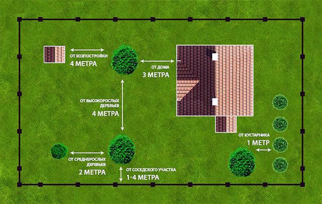 Расстояние от дома до дерева: на каком сажать, нормы СНиП и СанПиН для посадки по закону